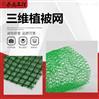 山东厂家直销三维植被网 护坡绿化植草网垫